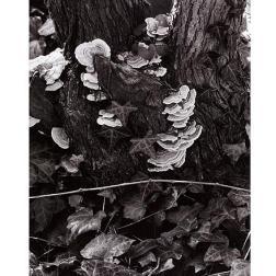 Hongos, el jardín, Orgeval, Francia], 1967 Copia a la gelatina de plata Colecciones FUNDACIÓN MAPFRE, FM000993 © Aperture Foundation Inc., Paul Strand Archive